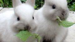 Кролики: разведение, выращивание, кормление, уход