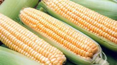 Как правильно выбрать кукурузу в початках