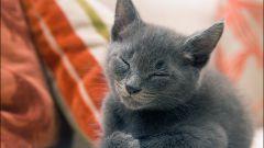 Мурлыканье кошек