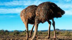 Самые известные заблуждения о животных