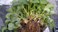 Какая корневая система бывает у растений