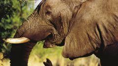 Какие животные самые большие