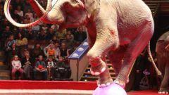 Какие цирки есть в Москве