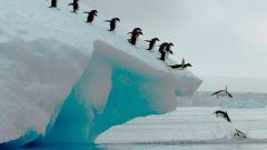 Кто открыл Южный полюс