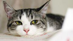 Как вылечить обезвоживание у кошки