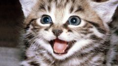 When do kittens change teeth