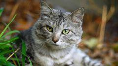 Какие прививки делать гуляющей кошке