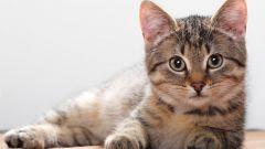 Повадки кошек и их значение
