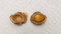 Стратификация семян - что это