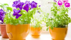 What to feed Pets flowers