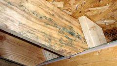 Как бороться с плесенью на деревянных стенах