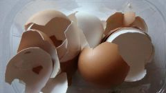 How to make fertilizer from eggshell