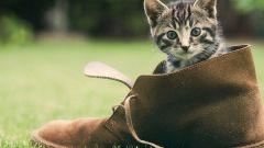 Как отучить котят грызть обувь