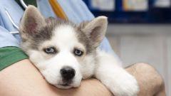 Чем может быть вызван понос у собаки