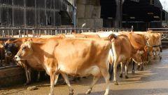 Почему коровам и козам нельзя давать сырой картофель