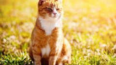 How to know when to do the cat contraceptive injection