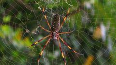 Откуда берутся зимой пауки