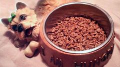 Как подобрать собаке корм