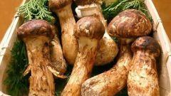 Как стерилизовать грибы
