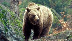 Как содержать медведя в неволе