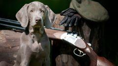 Какие собаки относятся к охотничьим