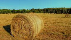 Сельское хозяйство как основа аграрной отрасли