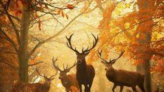 Лес как среда обитания