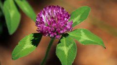 Растения как источники витаминов