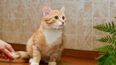 Как привить чистоплотность котенку