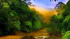 Река как среда обитания