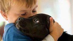 Что такое собакотерапия