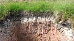 Что такое подзолистая почва