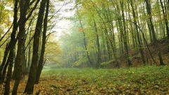 Как устроить прогулку по лесу