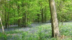 Лес как природная среда