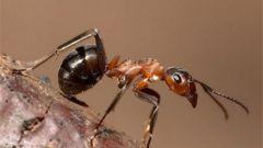 Как используют в лекарственных целях муравьиную кислоту