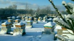 Как подготовить пчел к зимовке