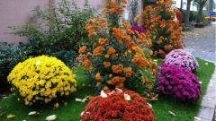 Что делать цветоводу в сентябре