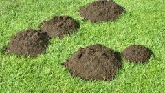 What plants repel moles