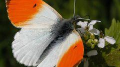 Что такое энтомология