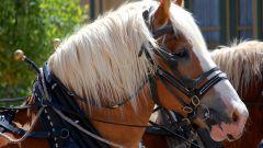 Какие масти коней существуют