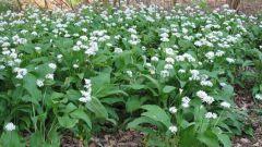 Как обработать лесную землю для посадки цветов