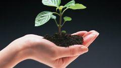 Какие есть профессии, связанные с экологией