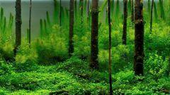 Отряд Зеленые водоросли: характеристика некоторых представителей