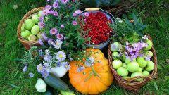 Садовые работы в сентябре
