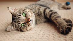 Беременность и роды у кошек: советы и рекомендации