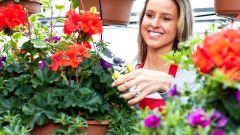 Зимний сад своими руками: оборудуем уголок для отдыха