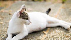 Сколько времени протекает беременность у кошки