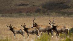 Южная Африка: заповедник Малолотжа