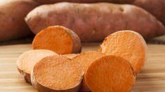 Топинамбур: полезные свойства, применение, рецепты блюд