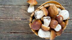 Гриб: полезные и вредные свойства гриба